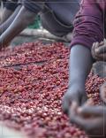 Café du Burundi - Kiboko - Grand cru