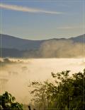 Café du Costa Rica - Huila