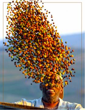 Nespresso - honduras bio