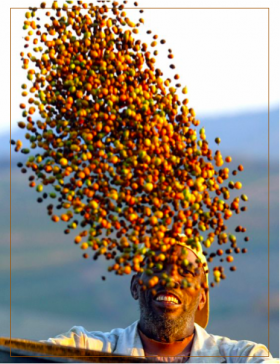 Nespresso - Pérou bio  - Photo avec Caps